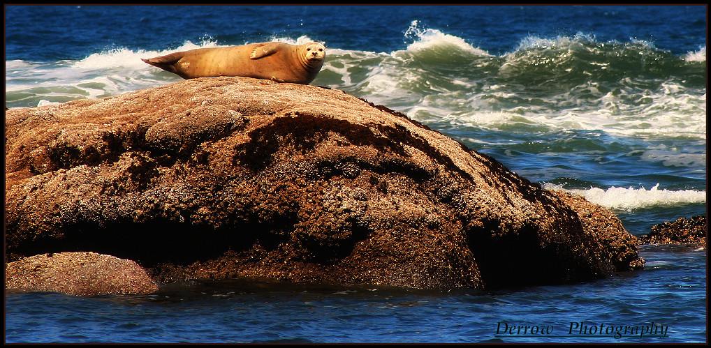 Oregon Coast 2008